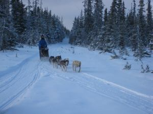 Learning a great deal through mushing
